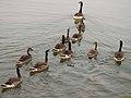Goose Creche.JPG