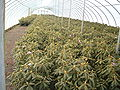 Greenhouse 6.JPG