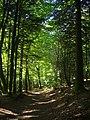 Guéret - forêt communale (02).jpg