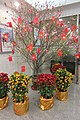 HK 上環 Sheung Wan 中國銀行 Bank of China Prunus persica 桃花 Chinese peaches Lunar Chinese New Year tree pink flowers Feb 2017 IX1.jpg