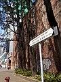 HK 荃灣 Tsuen Wan 美港貨倉 MayKong Godown 青山公路 Casrtle Peak Road name sign n trees Jan 2017 Lnv2.jpg