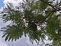 HK CWB 銅鑼灣 Causeway Bay 維多利亞公園 Victoria Park tree green leaves June 2019 SSG 05.jpg