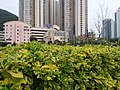 HK TKL 調景嶺 Tiu Keng Leng 彩明街 Choi Ming Street 寶覺中學 Po Kok Secondary School facade February 2019 SSG 02.jpg