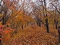 Haj Abdollah Mohamadi's Garden At Autumn (2) In Hajjiabad,Zeberkhan.jpg