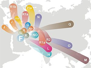 The diversion of Y-chromosome Haplogroup F and its descendants.