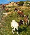 Henry Herbert La Thangue - Provencal Farm.jpg