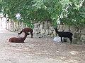 Henry Vilas Zoo IMG 2399.jpg