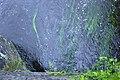 Herbes aquatiques indiquant les lignes de courant.jpg