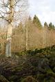 Herbstein Stockhausen Woellstein Outcrop Basalt b.png