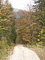 Herbstwald - panoramio (5).jpg