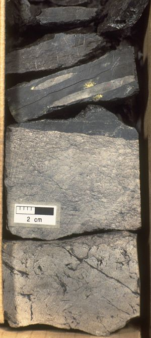 Jeanne d'Arc Basin - Thin coal seam with underclay pervasively churned by roots as cored from the Lower Cretaceous (Berriasian to lower Valanginian) Hibernia Formation at the Hibernia K-14 well in the Hibernia oilfield.