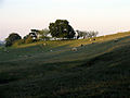 Hillside Pasture near Boxford - geograph.org.uk - 71361.jpg