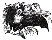 Horse-Shoe-Bat.png