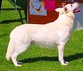 Horsebo Art-Deco.jpg