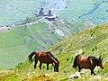 Horses - panoramio (12).jpg