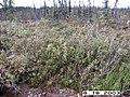 Hosford Creek Water Quality Testing, Yukon-Charley Rivers, 2003 2 (2bf3e65a-b131-4efb-9126-b02af97e9aec).jpg