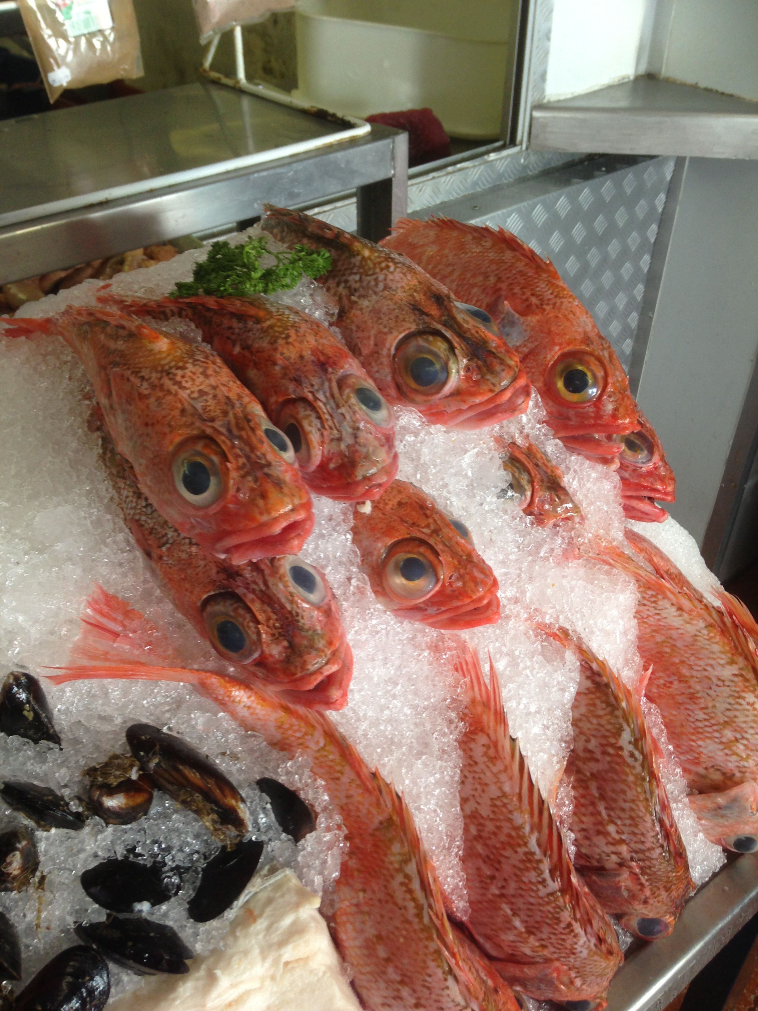 filehout bay deep sea fishjpg wikimedia commons
