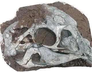 <i>Huanansaurus</i> Extinct genus of dinosaurs