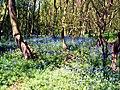 Husband Wood - geograph.org.uk - 1286031.jpg