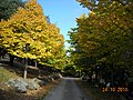 I colori dell'autunno - panoramio (1).jpg