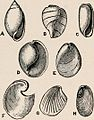 """Image from page 181 of """"Introduction to zoology; a guide to the study of animals, for the use of secondary schools;"""" (1900) (14782658574).jpg"""