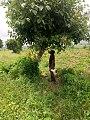 In the comfort of trees.jpg