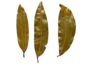 Indian bay leaf - tejpatta - indisches Lorbeerblatt.jpg