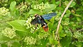 Insects from Madayipara DSCN2078.jpg