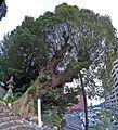 Isaniwa jinja shrine , 伊佐爾波神社 - panoramio.jpg
