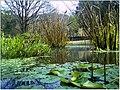 January Frost Botanic Garden Freiburg - Master Botany Photography 2014 - panoramio (7).jpg