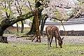 Japan 070416 Nara 01.jpg