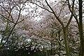 Japanse Tuin Hasselt - 03.jpg