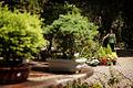 Jardín Japonés (6839338170).jpg