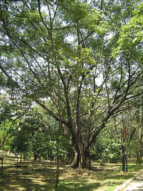 Arboles para jardin dise os arquitect nicos for Viveros frutales wikipedia