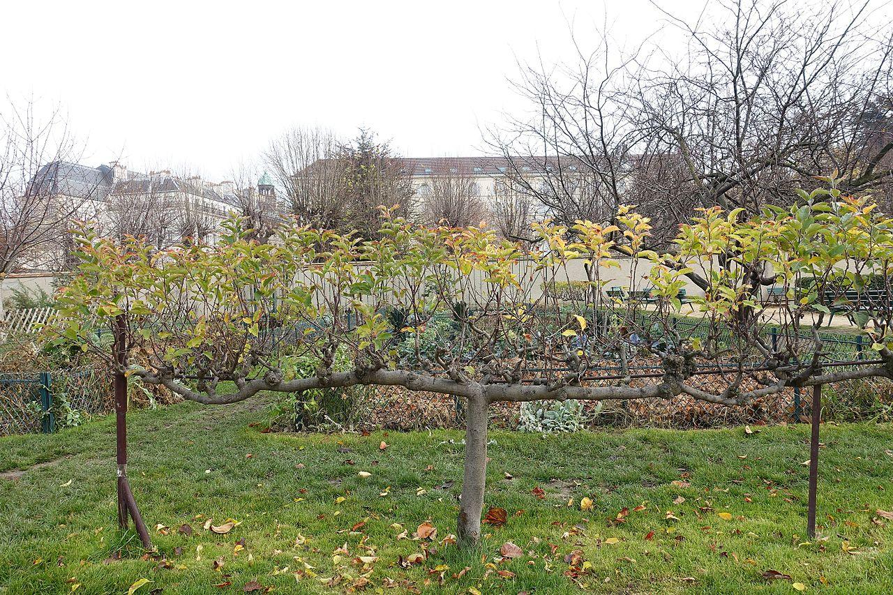 Fichier Jardin Catherine Laboure Paris 7 30750458813 Jpg Wikipedia