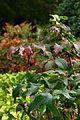 Jardin Japonais, Toulouse (8103291478).jpg