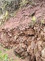 Jedburgh unconformity, close up 2.jpg