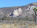 Joshua Tree National Park - panoramio (10).jpg