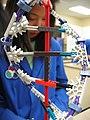 K'nex DNA model.jpg