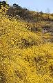 KOCIS Korea Seoul Spring Flowers 04 (8661613471).jpg