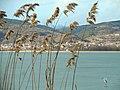 Kastoria bird stillness.jpg