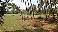 Kavthani, Maharashtra, India - panoramio.jpg