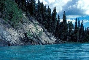 Kenai River - Kenai River bank.