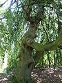 Kew Gardens P1170582.JPG
