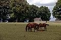 Kildare-04-Pferde und Fohlen-1989-gje.jpg