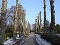 Kirkegårdsallé - panoramio.jpg