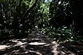 Kistenbosch National Botanical Garden - panoramio (5).jpg