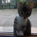 Kitten csms.png