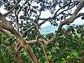 Kordara, Madhya Pradesh 485446, India - panoramio (5).jpg