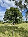 Kouzelný strom.jpg